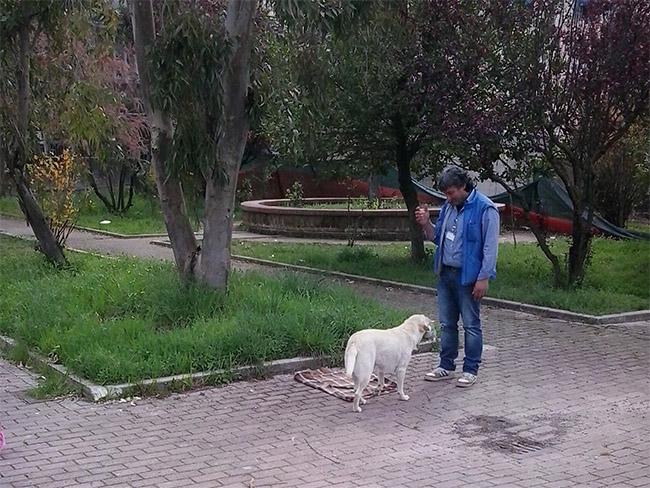 pet_0007_2016-04-05-11-30-30-jpg